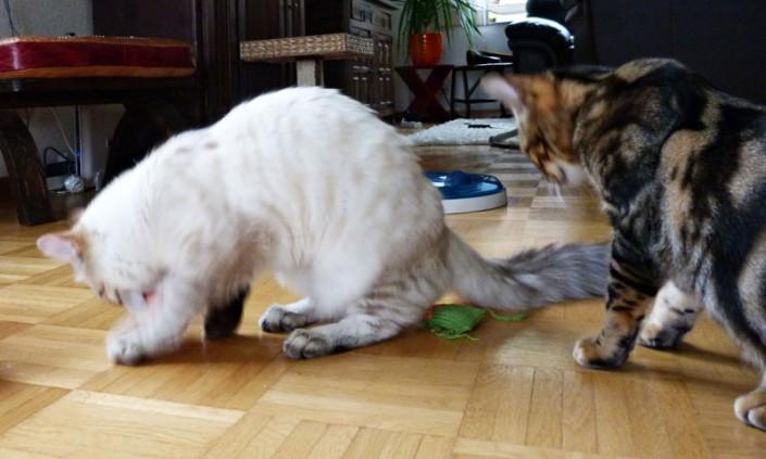 Grallou und Oskar