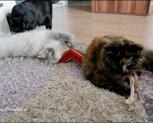 Freya und Yumi