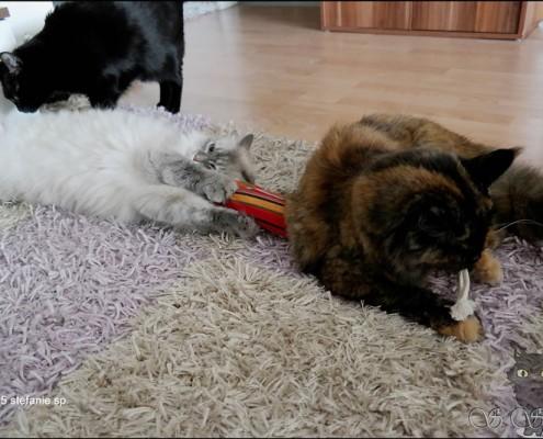 Freya und Yumi findens cool