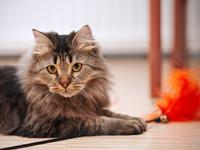 Katzen-Fotos