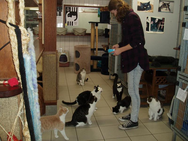 Katzenfütterung auf dem Poezenboot