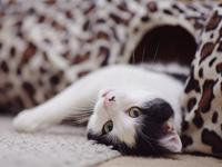 Katzen-Videos