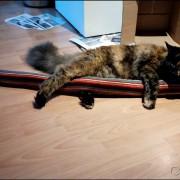 Yumi mit Mega-Rolli