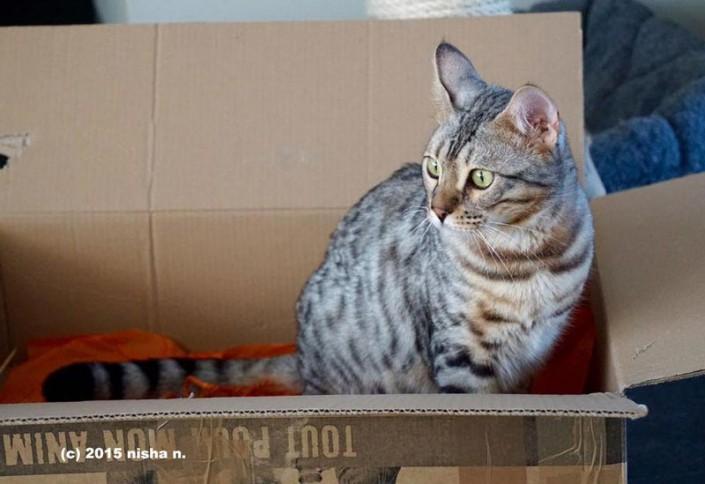 Harley beim Schachtel ausräumer