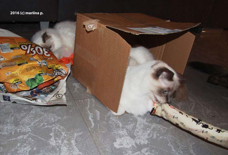 In Schachtel mit Baldi-Rolli