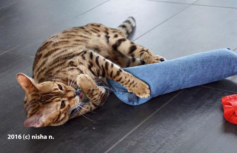 Jeans-Rolli im Test