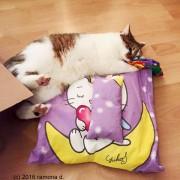 Katzi auf großem Liegekissen
