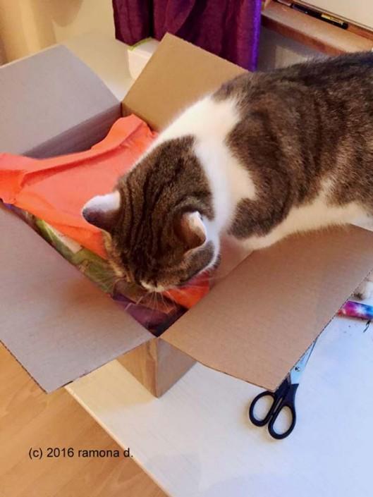 Tigerli beim Paket auspacken