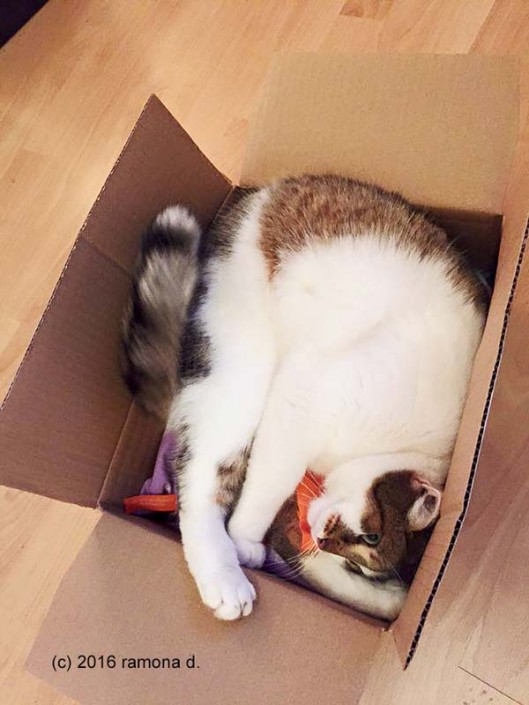 Tigerli liegt im Paket