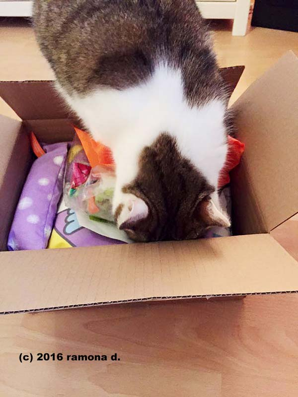 Tigerli packt das Paket aus
