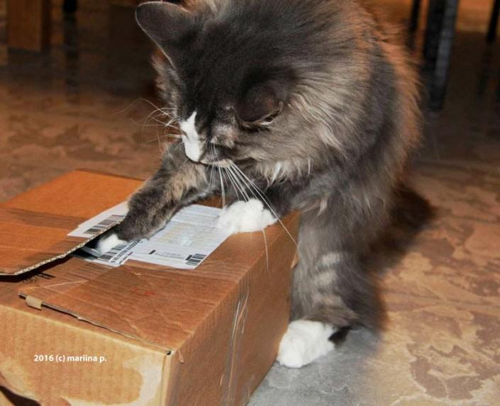 Was istim paket?